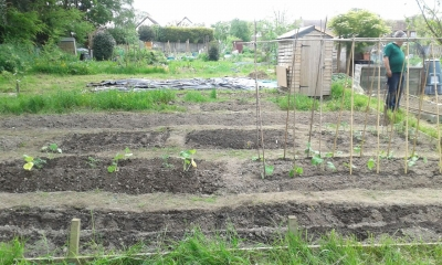 The allotment so far