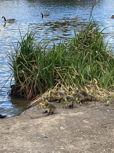 Service user enjoys looking at the ducks on a trip out to the park. Coast Community Care, Bexhill East Sussex
